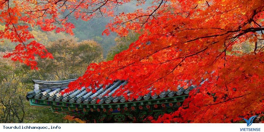 Tour du lịch Hàn Quốc - Mùa Lá Đỏ tháng 10,11,12/2017 Từ TP. HCM ,tour du lich han quoc  truot tuyet thang 022017 tu tp hcm