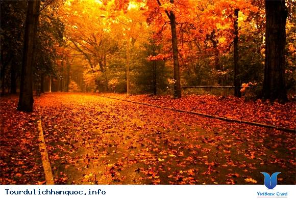 Tour Du Lịch Hàn Quốc mùa lá đỏ tháng 10,11